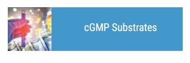 cGMP Substrates